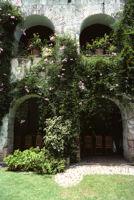 Oaxaca, vines climbing building archways, 1982 or 1985