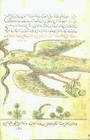 MS 170/46 : Arabian Nights. Sinbad the Sailor.