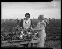 Women harvest turnips at a community garden in Los Angeles county, circa February 1934.