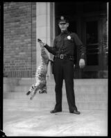 Officer Harry Reeve and the bobcat he killed, Los Angeles, September 1934