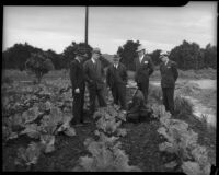 James J. Boyle, Rex Thomson, Lew Harwood, C.C. Talbot, and Culbert Olson stand in a field used as county food cooperative, Los Angeles, 1930s
