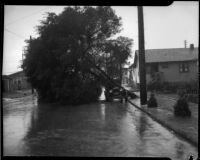 Fallen tree lands on vehicle after flood, Los Angeles, 1934