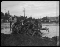 Group of male students at Los Angeles Junior College wrestle in the mud, Los Angeles, 1930s