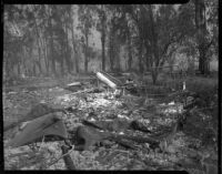 Aftermath of a forest fire, Altadena, California, October 1935