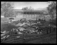 Remains of ranch touched by fire in Malibu, circa October 1935
