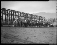 Opening gate at unknown horse race, Santa Anita track, Arcadia, circa 1935