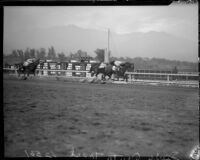 Finish line of unknown horse race, Santa Anita track, Arcadia, circa 1935