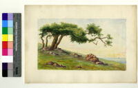 Watercolor painting of a tree on a coastline by Ralph Cornell