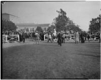 Paddock at the Santa Anita racetrack on Derby Day, February 22, 1937.