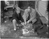 Accused murderer Fred Stettler showing Capt. Bert Wallis money Stettler had stolen and hidden in a potato sack at his home