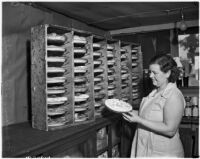 Woman baking pies at a cooperative in Los Angeles, 1930s