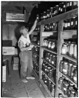 Man stacks jars of food on shelves at the Unemployed Citizens' League of Santa Monica, 1930s