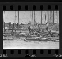 Workers clearing debris around damaged boats after a flood, Ventura, 1969