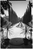 Tree-lined roadway on the estate of film comedian Harold Lloyd and his wife Mildred, Beverly Hills, 1927
