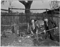 Deputy Sheriff Carmack and Larry Morrell dig up human skeleton from East Los Angeles backyard, Los Angeles, 1940