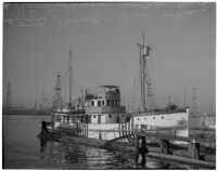 California Dept. of Fish and Game's research ship the N.B. Scofield just returned from a 10 week survey trip, Los Angeles, May 23, 1940