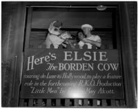 "Elsie the Borden Cow, star of the 1940 film ""Little Men,"" Los Angeles, 1940"