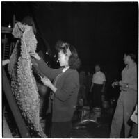Women attaches rose petals to a float in preparation for the Tournament of Roses parade, Pasadena, 1946