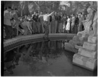 Man jumps into a fountain on USC's campus while a crowd watches, Los Angeles, 1946