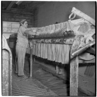 Employee using a machine to cut clay into slabs at the Universal Vitreous China Factory, Mentone, circa 1948