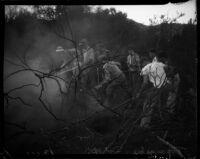 Citizens battling wildfire in the brush, Topanga, 1936
