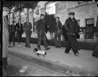 Group of unidentified men involved with the Douglas Aircraft Corporation plant strike marching past a dog, Santa Monica, 1937