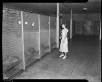 Young woman looks at dogs in Los Angeles' downtown city pound.  Circa 1937.