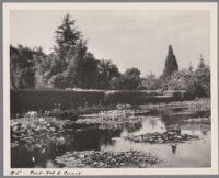 Lily pond, hedges, and trees