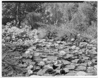 John Treanor residence, lily pond, 1930