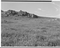 Grassy hillside with lupines in foreground, craggy rocks in background, San Joaquin Valley, 1935
