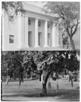Auditorium, University of Hawaii, Honolulu, and Kigelia tree, 1930