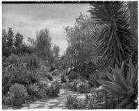 Alfred E. Dieterich residence, view of succulent garden with stone path, Montecito, 1931