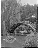 Huntington Botanical Gardens, lily pond and bridge in the Japanese garden, San Marino, 1932