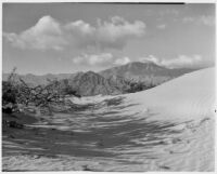 Chaparral growing in the desert nest to a sand dune, Coachella Valley, 1935