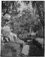 La Mortola botanical garden, view of lavender plants growing along a path, Ventimiglia, Italy, 1929
