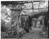 La Mortola botanical garden, view down a walkway enclosed by Wisteria sinensis on a pergola, Ventimiglia, Italy, 1929