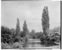 Royal Botanic Gardens, Kew, view of geese by the lake, Kew, England, 1929