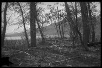 Trees near Mono Lake, Mono County, [1929?]