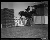 Horse jumping at the Palm Springs Field club during the Desert Circus Rodeo, Palm Springs, 1938