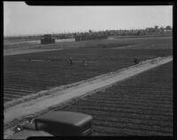Farm workers in field, [1930s?]