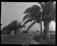 Woman and girl on curved road with palm trees, Santa Monica, 1928