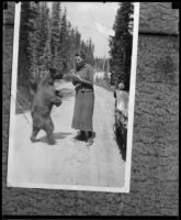 Woman in skirt and jacket, possibly murder victim Fay Sudow, feeding bear cub, [1910-1920?]