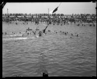 Swimming race finish, Cabrillo Beach, Los Angeles, 1933