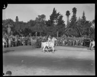 White horse and rider at the Tournament of Roses Parade, Pasadena, 1929