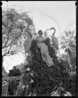 """Helen Waters on the """"Birds of Paradise"""" float in the Tournament of Roses Parade, Pasadena, 1935"""