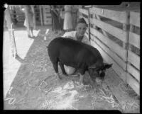 Gray Kettering and his winning hog Charley at the LA County Fair, Pomona, 1934