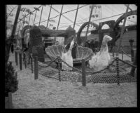 American Fruit Growers display at the Valencia Orange Show, Anaheim, 1921