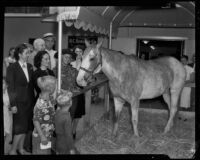 "Will Rogers' horse ""Soapsuds"" with Will Rogers Memorial Celebration attendees, Santa Monica, 1940"