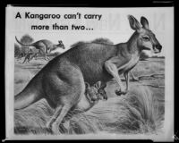 Kangaroos in the Australian bush