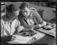 Santa Monica College students dissecting frogs, Santa Monica, 1937